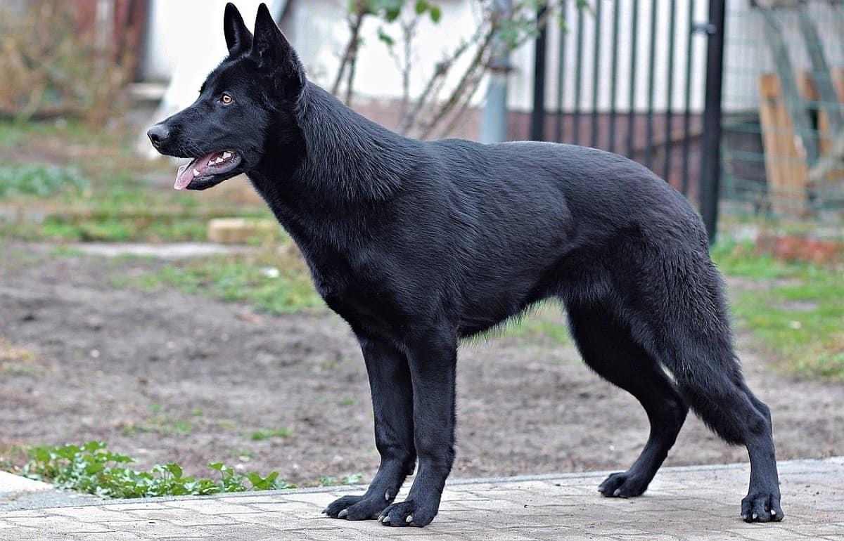 Best Guard Dog Names
